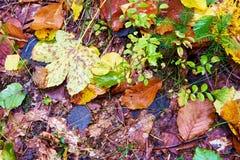 leaves för leaf för ram för abstrakt höstbakgrund färgrika Arkivbild