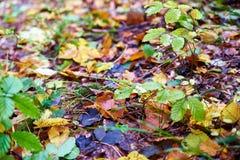 leaves för leaf för ram för abstrakt höstbakgrund färgrika Royaltyfri Bild