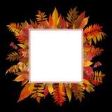 leaves för leaf för ram för abstrakt höstbakgrund färgrika Royaltyfri Foto