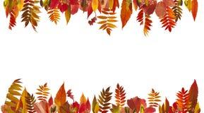 leaves för leaf för ram för abstrakt höstbakgrund färgrika Arkivbilder