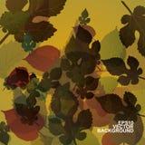 leaves för leaf för ram för abstrakt höstbakgrund färgrika Arkivfoton