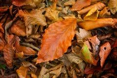 leaves för leafs för höstbakgrund färgrika torra Arkivfoto