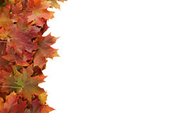 leaves för leafs för höstbakgrund färgrika torra Royaltyfri Bild