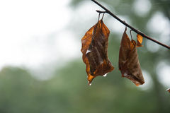 leaves för leafs för höstbakgrund färgrika torra Royaltyfria Foton