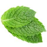 Leaves för ny mint arkivfoto