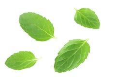 Leaves för ny mint som isoleras på vit bakgrund fotografering för bildbyråer