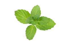 Leaves för ny mint som isoleras på vit bakgrund Arkivbilder