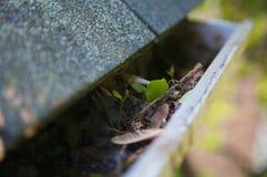 leaves för rengöringsfallavloppsränna arkivfoton