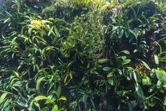 leaves f?r acaciabakgrundsgreen Naturlig tropisk l?vverk f?r djungel f?r bakgrundsnaturskog royaltyfri bild