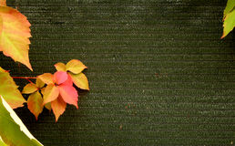 Leaves in fabric background Royalty Free Stock Image