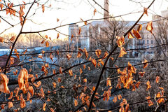 Leaves and factory. Orange leaves against old factory Stock Image