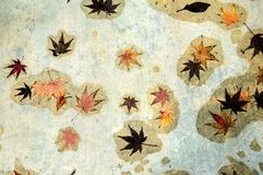 Leaves Of Fall  Stock Image