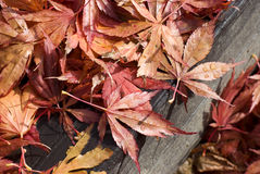 Leaves at fall Stock Photo