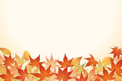 Leaves in fall. Some kinds of leaves in fall Royalty Free Stock Photography