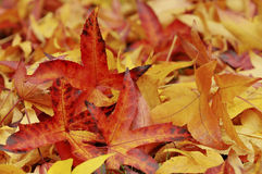 Leaves Fall Stock Image