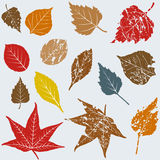 Leaves - Fall. Hand drawn plant line art - fall colors Royalty Free Stock Photography