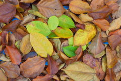Leaves fall, autumn background texture Stock Photos