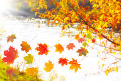 Leaves Fall, Autumn Stock Photo