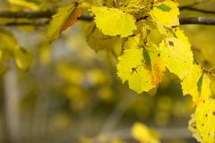 Leaves in fall colors royalty free stock photography