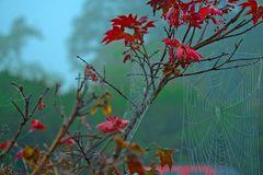 Leaves with FALL colors - Red - Fog.  Royalty Free Stock Image