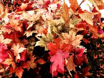 Leaves fall decoration Stock Photos