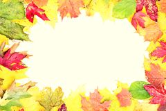 Leaves fall frame. In retro style. Real leaves forming a frame. Retro vintage style photo Stock Photo