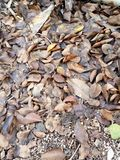 Leaves falling down to the ground become humus in the end royalty free stock photos