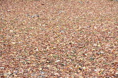 Carpet of leaves Royalty Free Stock Photography