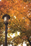 Leaves in the Fall. Leaves in Minnesota Fall with Light Royalty Free Stock Image