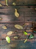 Leaves fall on the plank. Or wooden floor royalty free stock image
