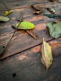 Leaves fall on the plank. Or wooden floor stock photos