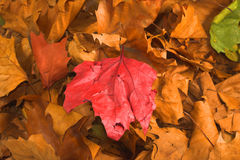 Leaves during fall season Royalty Free Stock Images