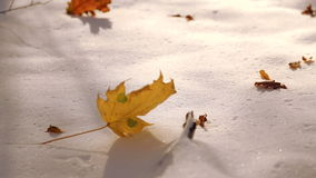 The leaves fall on the snow in the park. The first snow in the autumn park. The leaves fall on the snow in the park. stock footage