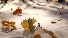 The leaves fall on the snow in the park. The first snow in the autumn park. The leaves fall on the snow in the park. stock video
