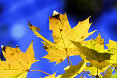 Leaves in fall time Stock Photography
