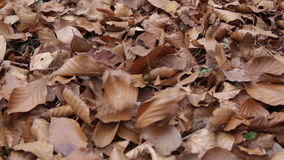 The leaves fall to the ground. Closeup. leaf fall stock video footage