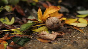 The leaves fall to the ground over the snail shell stock video