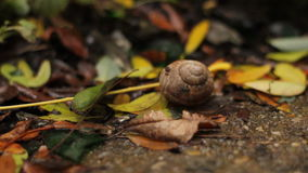 The leaves fall to the ground over the snail shell slow motion stock video footage