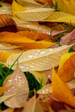 Leaves in the fall Stock Image