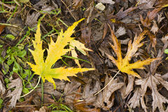 Leaves fallen on ground Royalty Free Stock Image