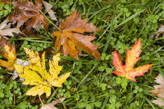 Leaves fallen on ground Stock Image