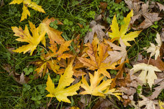 Leaves fallen on ground Royalty Free Stock Photo