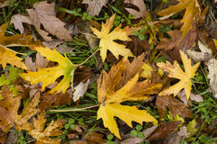 Leaves fallen on ground Royalty Free Stock Photos