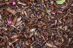 Leaves fallen on the ground.  Changing of season. Leaves scattered on the ground during the changing of seasons Royalty Free Stock Image