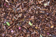 Leaves fallen on the ground.  Changing of season. Leaves scattered on the ground during the changing of the seasons Stock Photography