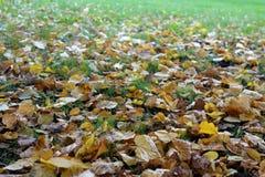 Leaves_fallen jpg Royalty-vrije Stock Foto