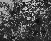 Leaves fallen on net Stock Photography