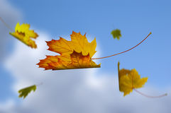 Leaves fallen in the sky Stock Photos