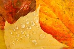 Leaves Fallen Winter Nature Ground Autumn Season Change Dew Drop Stock Photography