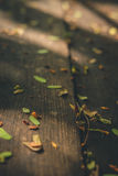 Leaves fallen on wood table with some sunlight. Close up selective focusing stock photos